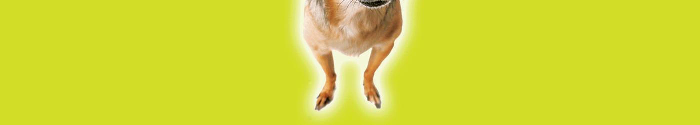 Horry County Humane Society